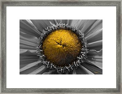 Number 2 Framed Print by Mitch Shindelbower