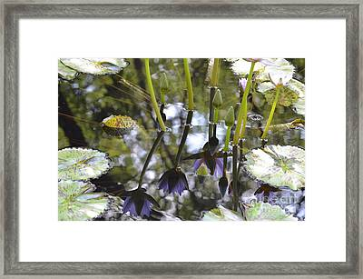 Numinous Reflections Framed Print