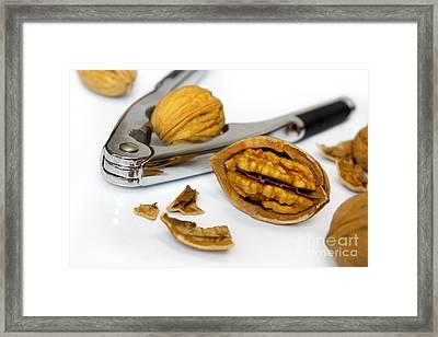 Nut Cracker Framed Print by Carlos Caetano