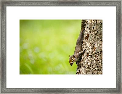 Nut Job Framed Print by Jason Smith