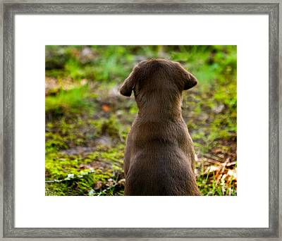 Nute Stands Guard Framed Print by Jean Noren