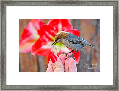 Nuthatch Bird Friend Framed Print