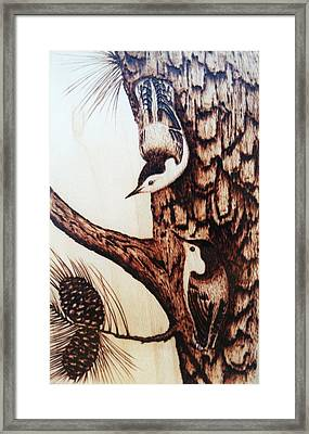 Nuthatch Heaven Framed Print by Susan Rice