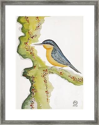 Nuthatch Six Framed Print by Alexandra  Sanders