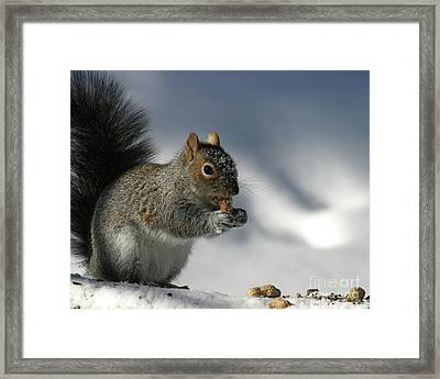 Nutty About Winter Framed Print