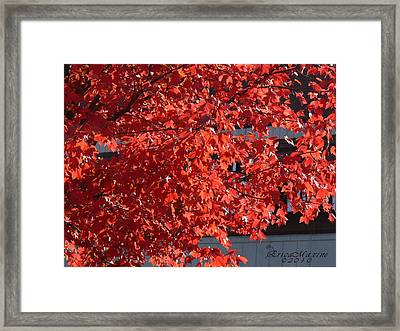 Ny Fall Framed Print by EricaMaxine  Price