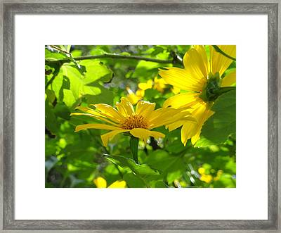 Oahu Sunshine Framed Print