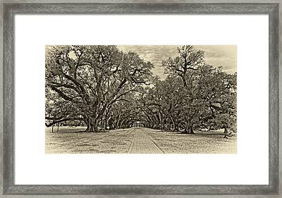 Oak Alley 3 Antique Sepia Framed Print by Steve Harrington