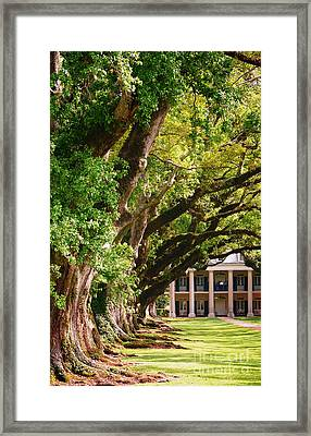 Oak Alley Trees Framed Print