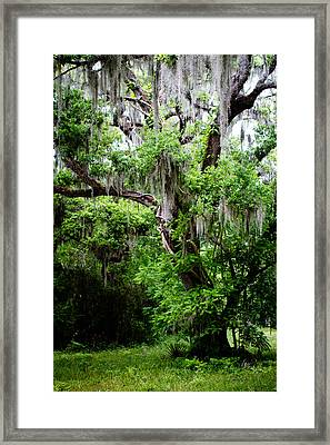 Oak And Moss Framed Print