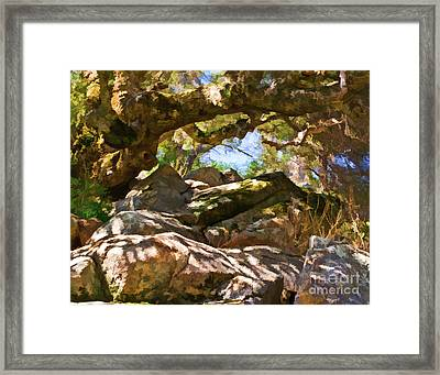 Oak Canopy Framed Print