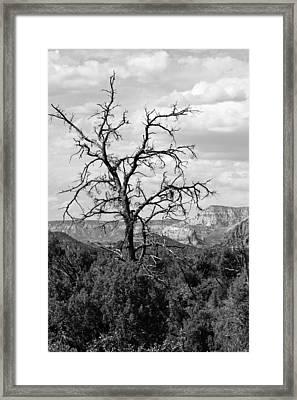Oak Creek Tree Framed Print by Lauri Novak