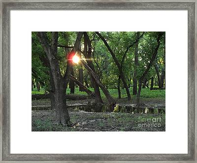 Oak Grove State Park Framed Print by Janeen Wassink Searles
