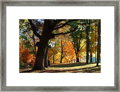 Oak In Autum Woods Framed Print