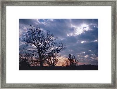 Oak In Sunset Framed Print