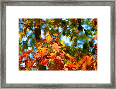 Oak Leaf Bouquet Framed Print by James Hammen