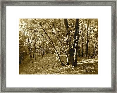 Oak On A Slope Sepia Framed Print