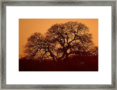 Framed Print featuring the photograph Oak Tree At Sunset by Rima Biswas