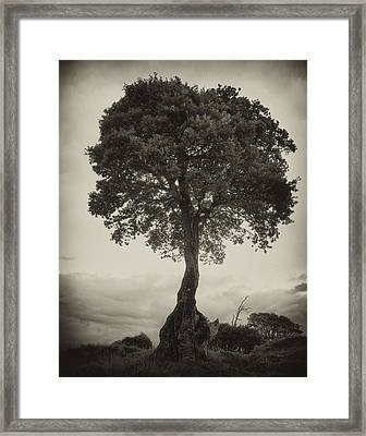 Framed Print featuring the photograph Oak Tree by Hugh Smith