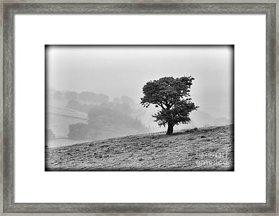 Oak Tree In The Mist. Framed Print by Clare Bambers