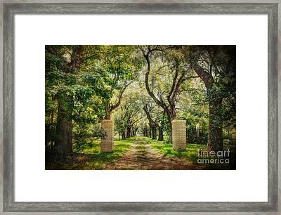 Oak Tree Lined Drive Framed Print by Joan McCool