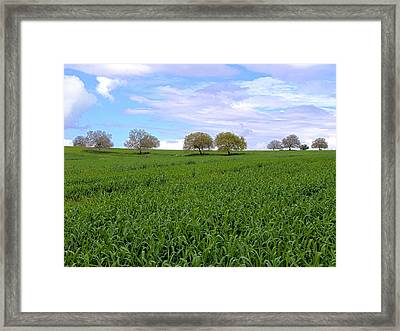 Oak Trees And Clouds Framed Print
