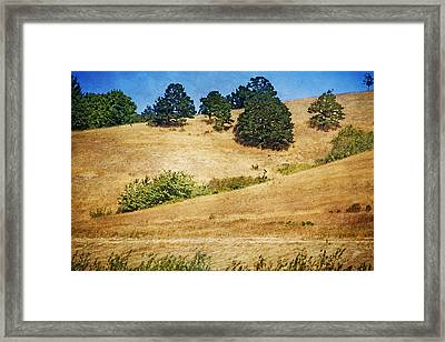 Oaks On Grassy Hill Framed Print by Bonnie Bruno