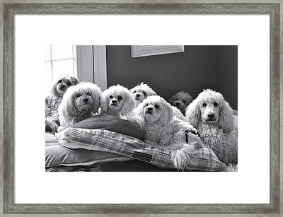 Obedience School For Dogs Framed Print