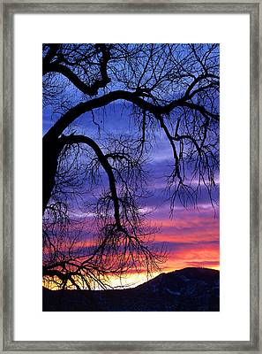 Framed Print featuring the photograph Obeisance by Jim Garrison