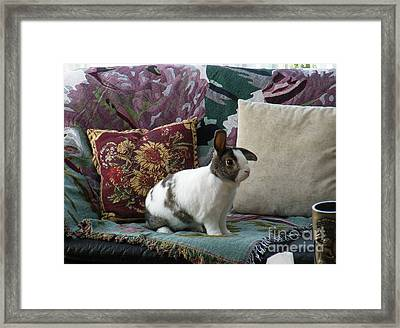Obelix The Rabbit  Framed Print