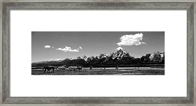 Framed Print featuring the photograph Oblivious by Dan Wells