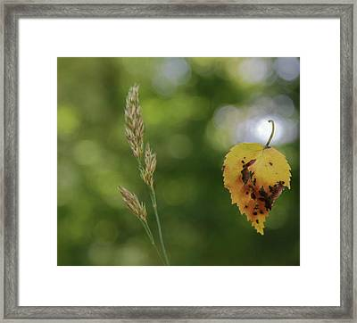 Observing The Fall Framed Print by Odd Jeppesen
