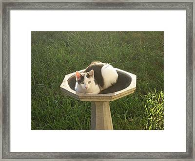 Framed Print featuring the photograph Occupied Bird Bath by Deb Martin-Webster