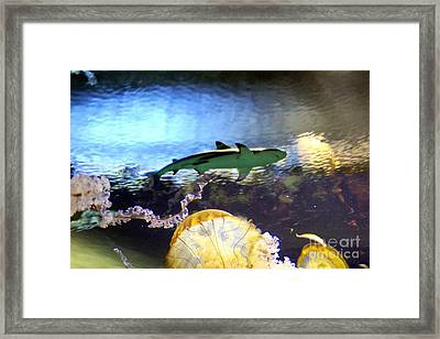 Ocean Encounter Framed Print by Kevin Moore