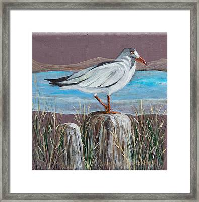 Ocean Sea Gull Framed Print by Janna Columbus