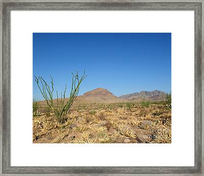Ocotillo And Mountain Framed Print