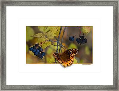 October Delight Framed Print