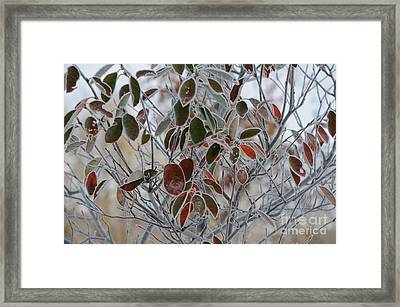 October Frost Framed Print by Linda Seacord