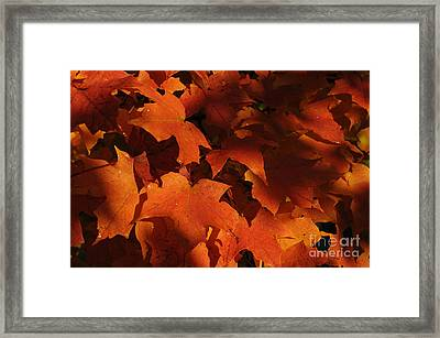 October Glow Framed Print by Luke Moore