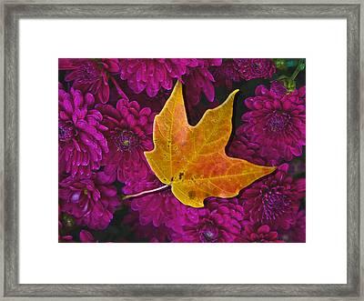October Hues Framed Print by Paul Wear