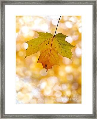 October Maple Leaf Framed Print by Angie Rea