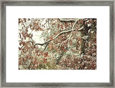 October Snowstorm Framed Print by JAMART Photography