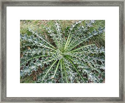 October Thistle Framed Print