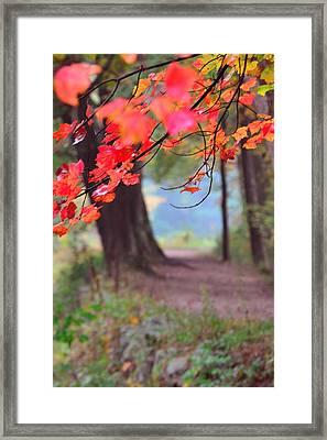 October Walk Framed Print by Mandi Howard