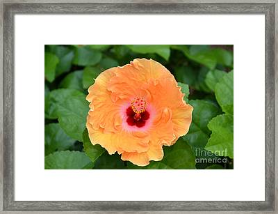 Octobers Greeting  Framed Print by Kathy Gibbons
