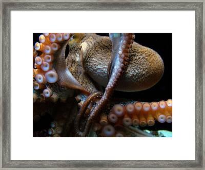 Octopus 1  Framed Print