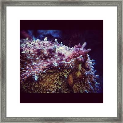 #octopus #giantpacificoctopus Framed Print