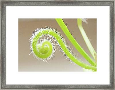 Octopus Plant's Flower Framed Print by Steve Taylor Photography