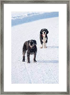 Framed Print featuring the photograph Odd Couple by Andrew  Michael
