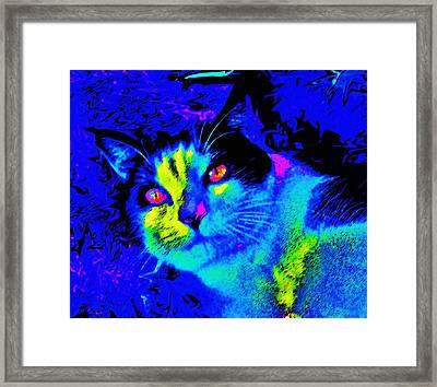 Oden Oreo Framed Print by Julie Hiskett